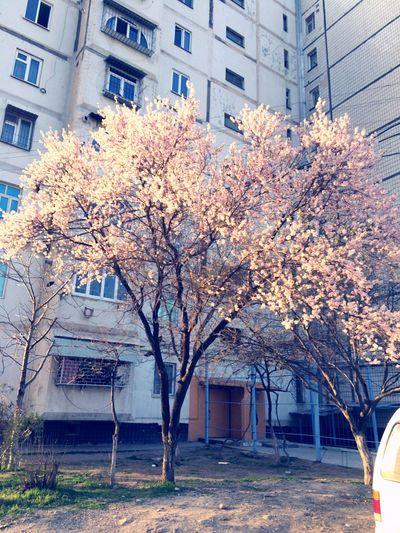 Spring 2016 Tashkent City 24.02.2016 Pastel Power