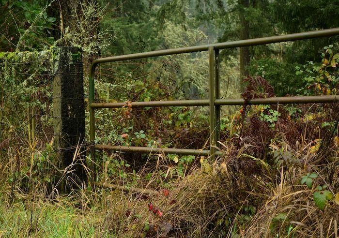 Taking Photos Nikond3300 NikonD3300📷 Farm Old Gate Forest EyeEm Nature Lover EyeEm Best Shots - Nature Trail