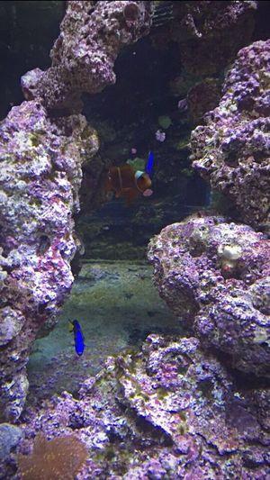 Aquarium ❤️