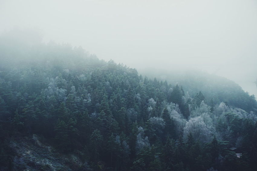 foggy scenery Nature Tree Beauty In Nature No People Fog Tranquil Scene Outdoors Scenics Sky Day Green Sweden Svinesund Beauty In Nature Foggy Day Freshness Forest Cold Temperature Winter Tree Frost Foggy Scenic Snow Trees