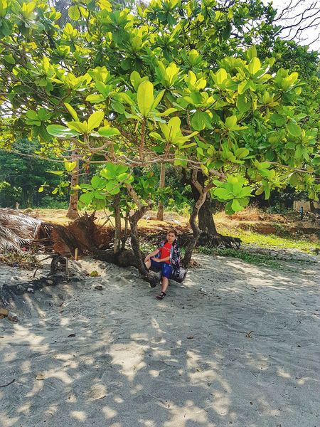 Nature Green Color Beauty In Nature Freshness Tree Beach Beachgoals