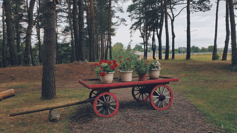 Wagon  Flowers Forest Nature Trees And Sky Taking Photos Summer ☀ Eye4photography  Holidays Traveling