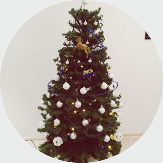 NewYear Trees Merry Christmas!