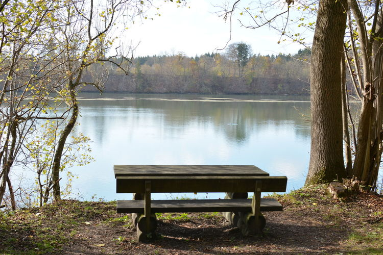 Tree Water Plant Lake Bench Tranquility Nature Beauty In Nature Tranquil Scene Seat Day Park Empty Scenics - Nature Non-urban Scene Trunk Growth No People Idyllic Park Bench Outdoors