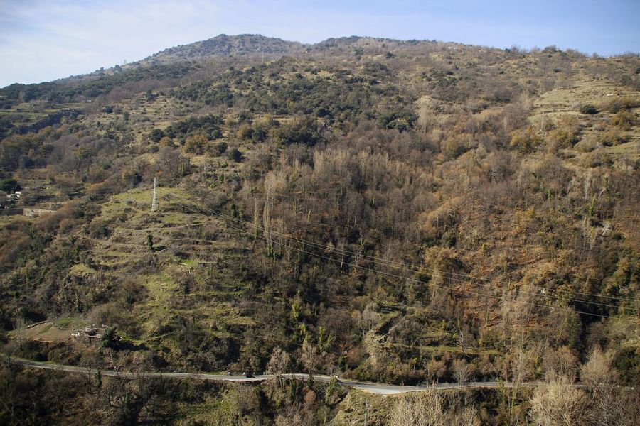EyEmselect Mountain Alpujarra Granada Weekend Spain♥ Enjoying Life EyeEm Selects Mountain Nature Tree Outdoors Landscape Day No People