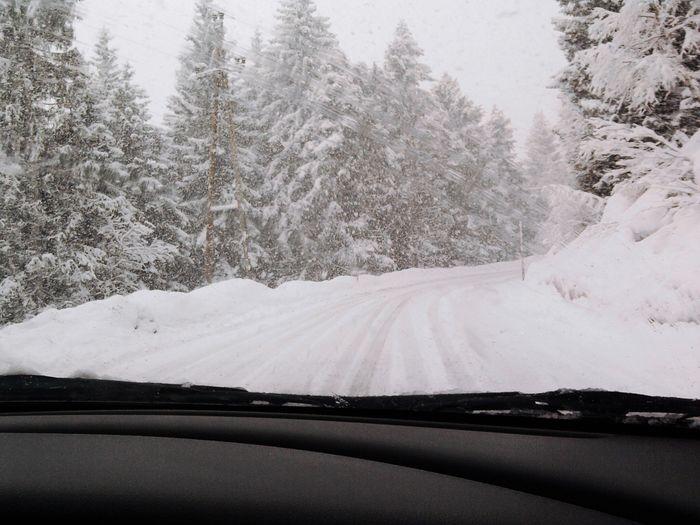 Snow Winter Cold Temperature Tree Plant Car Nature Scenics - Nature Beauty In Nature