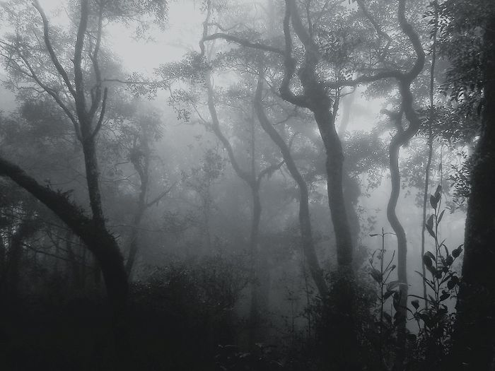 The silent forest at Mount Kinabalu.