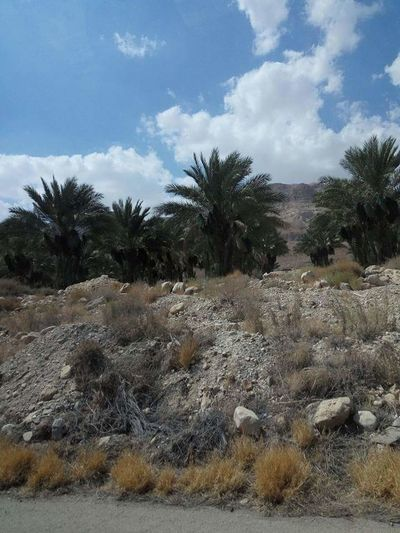 Cloud - Sky Palm Tree Tree Sky Landscape Outdoors Nature Day No People Desert Arid Climate