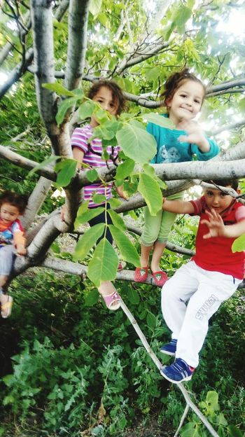 EyeEmNewHere Tree Girls Child Growth Front Or Back Yard Day Green Color