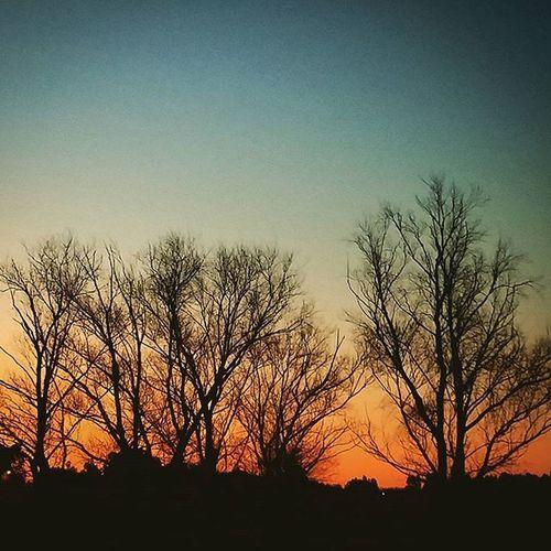 Extrañando el aroma a Campo ... Missing the Countryside Scent ... Memories Weekend Farm Farmlife Skyporn Sky Sunsetporn Sunsetlovers Orange Shadows Shapes Shape Sombras Atardecer Dusk Twilight Penumbra Picoftheday Instamoment Instagood