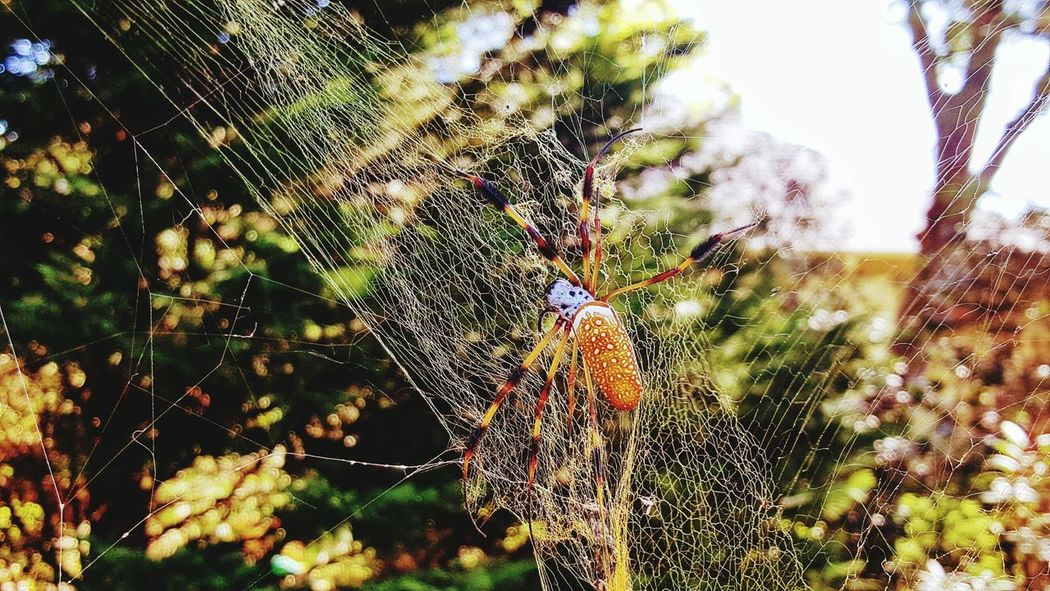 Nature Spider Web Beauty In Nature Day Web Close-up No People Fragility Spider Spider Eyes