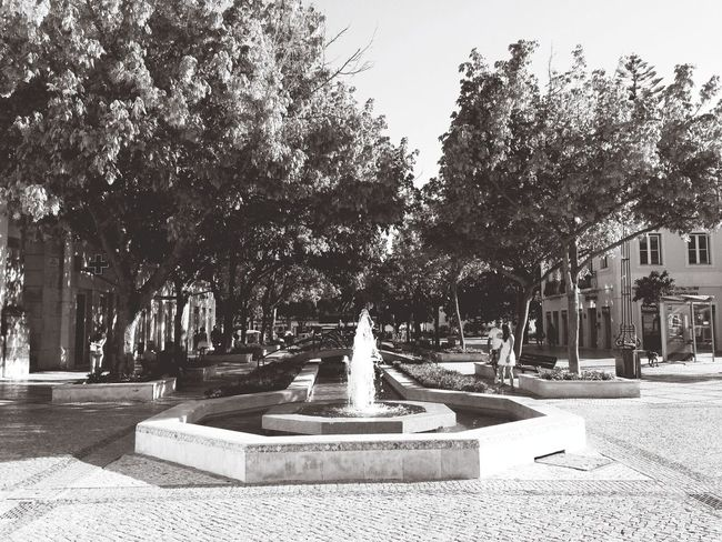 My City Fountain Black And White