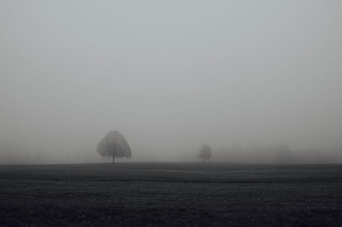 Fog Environment Landscape Tranquil Scene Nature No People Non-urban Scene Grass Isolated Foggy Day B&W Collection monochrome photography Black & White