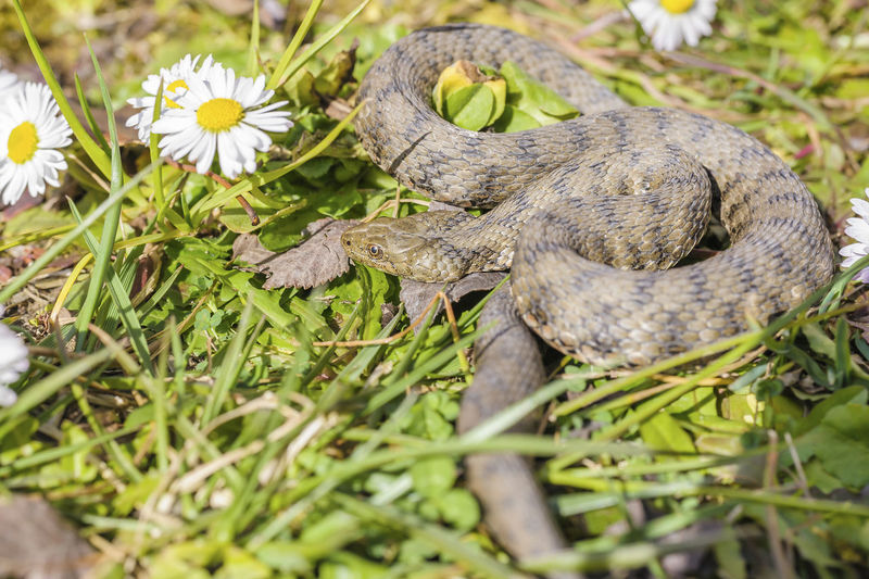 Close-up of snake on grass