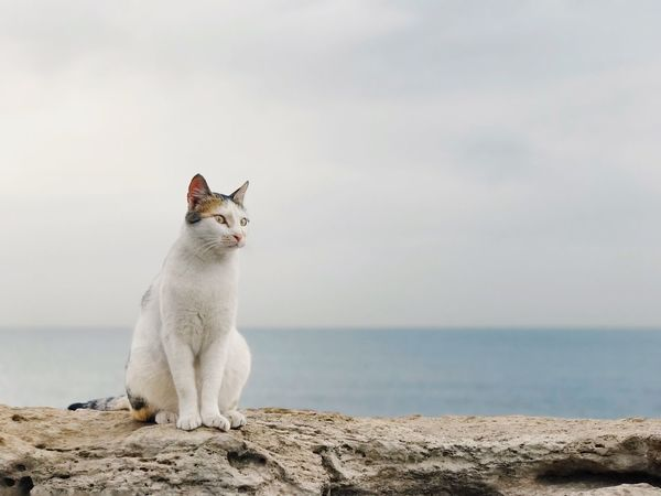 Pet Portraits Domestic Cat One Animal Animal Themes Pets Domestic Animals Mammal Feline Sitting Sea Nature Outdoors Horizon Over Water No People Day Sky Beach מייבתגלים מייאייפון7 Shotoniphone7plus IPhone7Plus מייים ShotOnIphone מייחתול