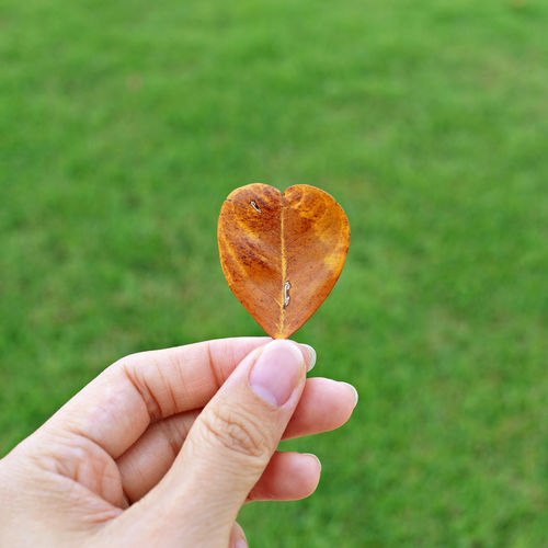 Cropped Hand Holding Heart Shape Leaf Over Field