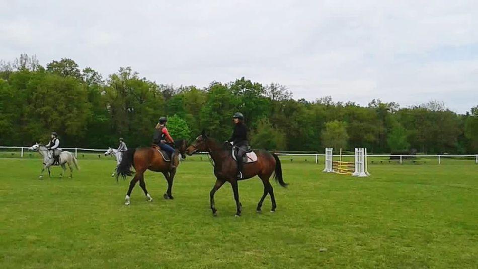Hello World Enjoying Life Relaxing That's Me Horses Animal Love Sport