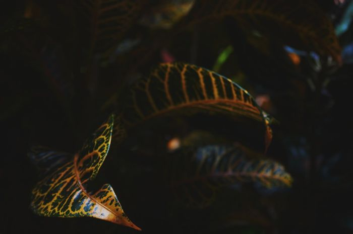 Leaf 🍂 Leaf ใบไม้สีเขียว ใบไม้ ใบไม้สวย ดอกไม้ (Flower) Flower Leafs 🍃 Full Length Celebration Close-up