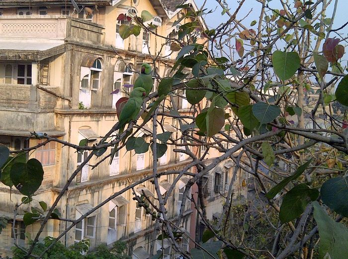 Adapted To The City Building Exterior Architecture Built Structure Tree No People Branch Outdoors Sky City Day Nature Birds 2 Green Parrot Leaves BranchesCity Nature Parrot Love Birds Couples Red Peak Parakeets