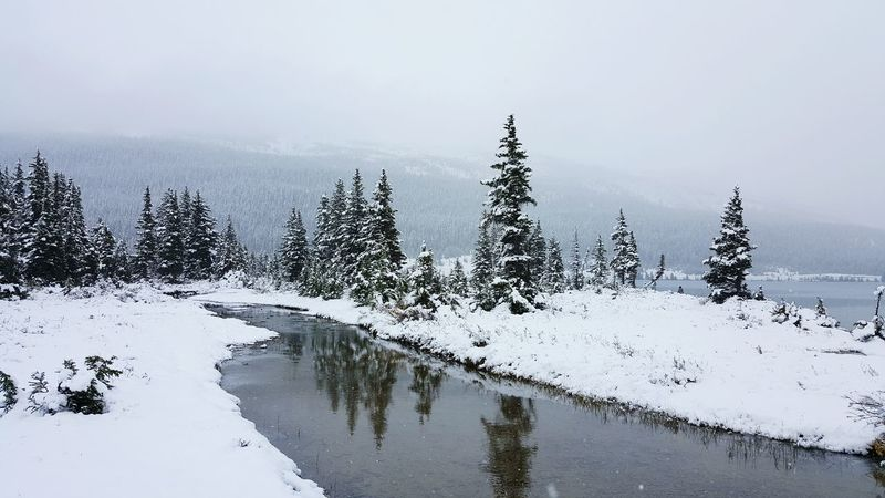 Winter Cold Temperature Snow Season  Weather Tranquil Scene Tree Scenics Tranquility Beauty In Nature Nature Non-urban Scene Sky Tourism Vacations Remote Ethereal Day Outdoors Majestic Canadian Rockies  Deep Snow Beauty In Nature Snow Covered No People