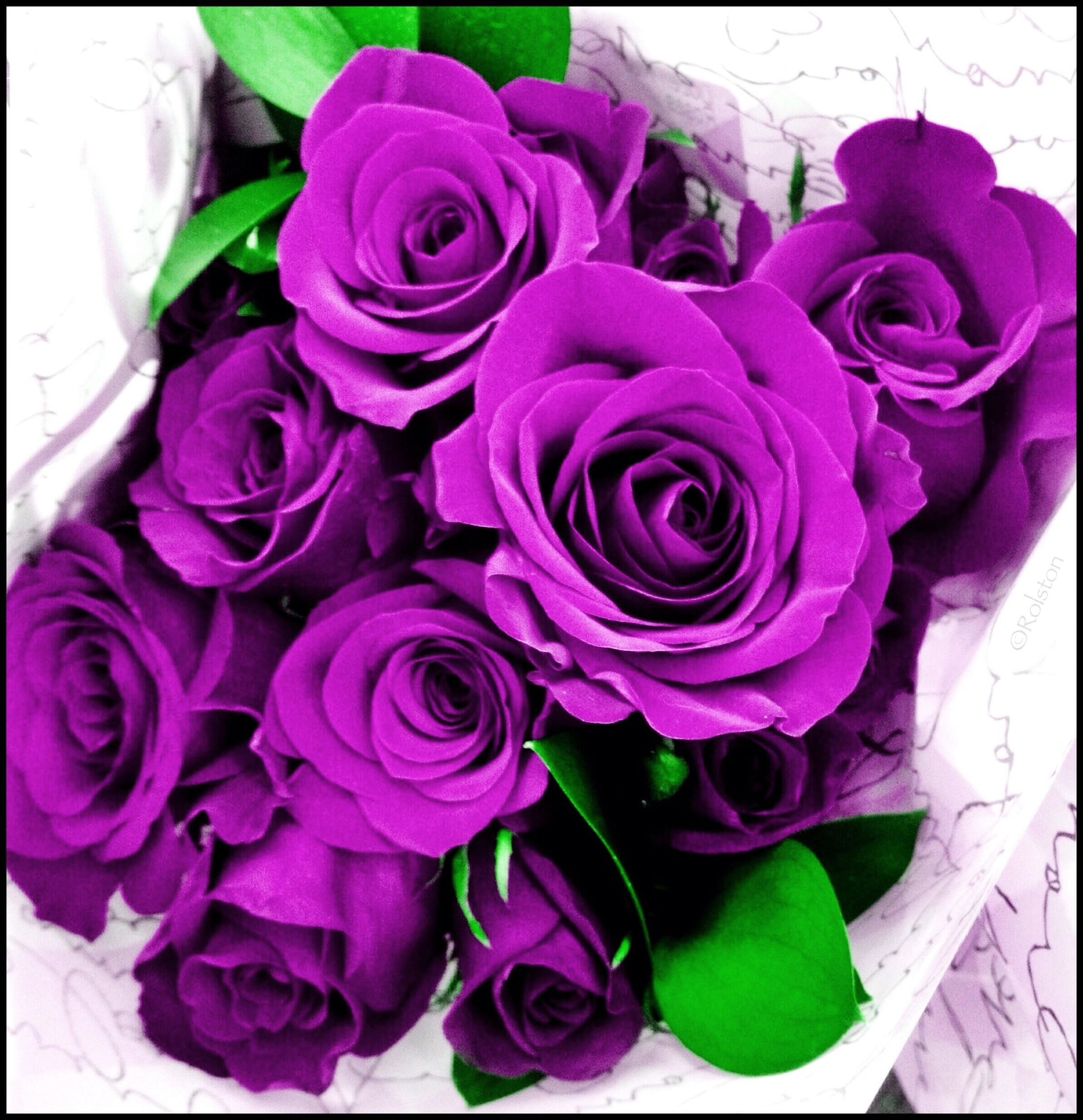 flower, transfer print, freshness, fragility, petal, rose - flower, flower head, indoors, auto post production filter, beauty in nature, pink color, close-up, rose, plant, growth, nature, bouquet, purple, vase, high angle view
