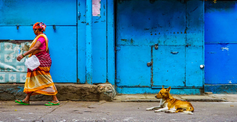 """"""" eyes which follows steps """" Dog Street Dog Dogs Of EyeEm Sonyalpha Streetphotography Street Photography India Lifestyles SonyAlpha6000 Woman Indian Indiapictures Streetphoto_color Street Photo City Pets Blue Multi Colored Cultures City Street Sari Bangle Indian Culture  Traditional Clothing Pedestrian Door Street Scene Walking Street Closed Door"""