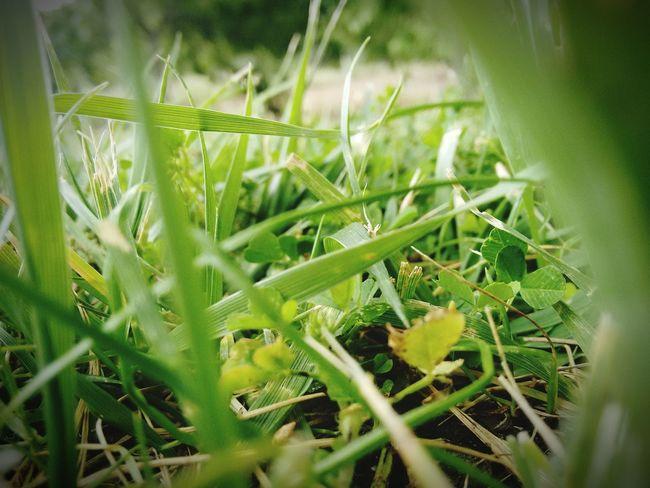Green Grass Beautiful Garden