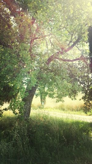 Sun Tree Today Estate