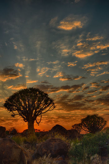 Beauty In Nature HDR Namibia Nature No People Quivertree  Red Sky At Sunset Silence Silhouette Sunset