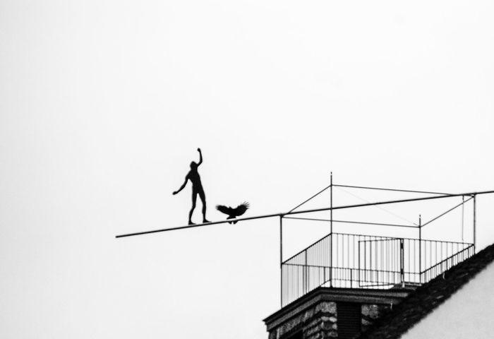 balance Animals In The Wild Balance Balance Act Bird Clear Sky Eagle And Man Man And Eagle One Animal Sky