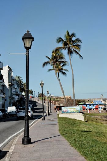 Street by palm trees against sky