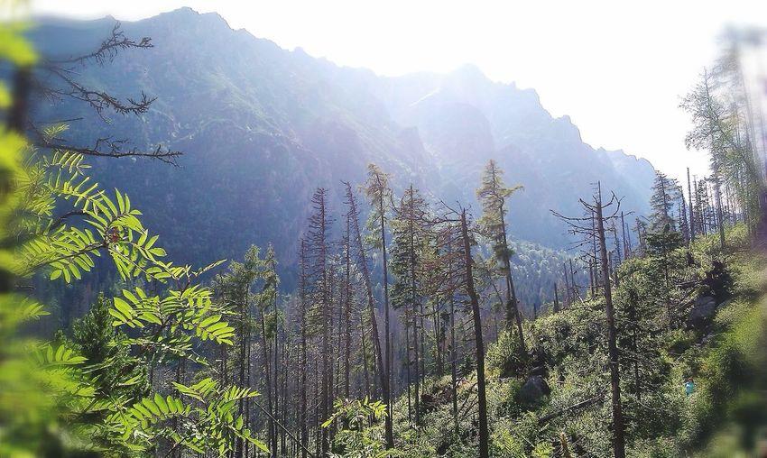 High Tatra -