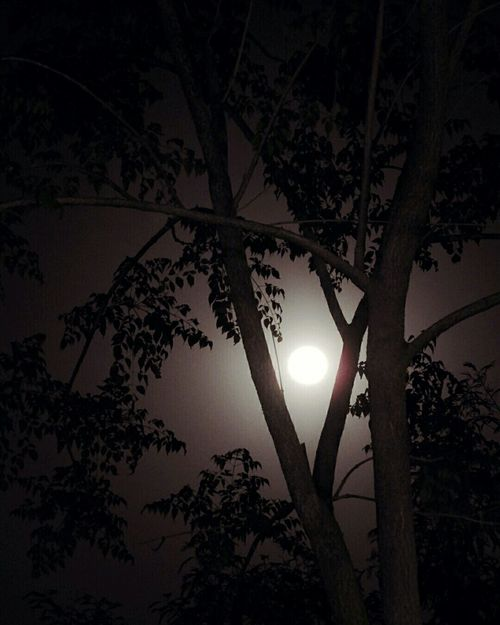 Moon Moonlight Full Moon Creative Photography Framing Tree Night Sky Nature Beauty In Nature Branch Outdoors Happiness Moonphotography EyeEm Nature Lover Eyeemphotography TheWeekOnEyeEM Landscape No People EyeEm Best Shots EyeEmNewHere Peace Peaceful Night Women Around The World Flying High