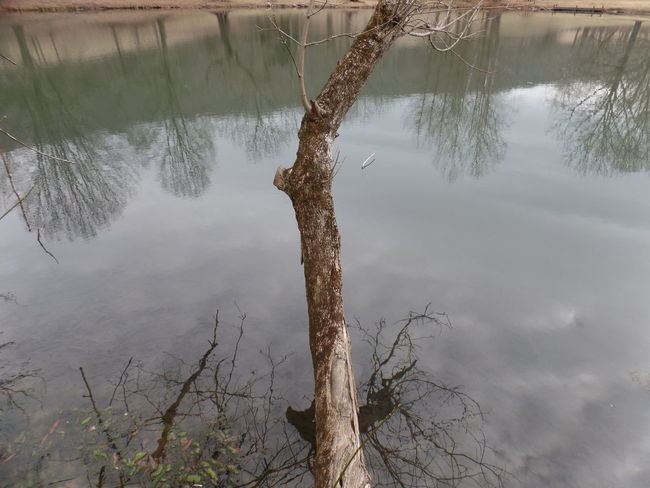 Tree Water Reflection Nature Pond No People Growth Outdoors Day Sky Cold Temperature Tranquility No Edit/no Filter Tranquil Scene Scenic View Beauty In Nature Cloud - Sky Bare Tree
