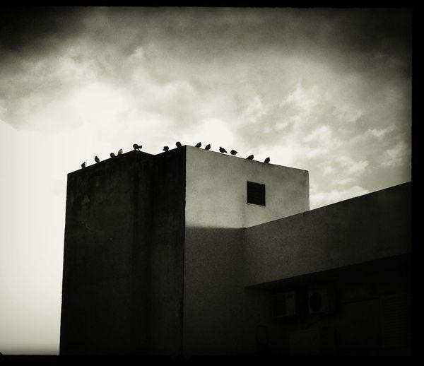 Architecture Black And White Pigeons Urban Landscape
