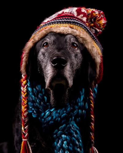 Close-up portrait of a dog over black background