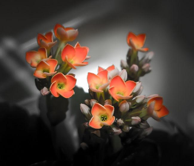最近始めた Hydroculture 自分のは150円くらいの小さな花だけど可愛くて好き♪q(^-^q) Nature_collection Flower EyeEm Best Edits