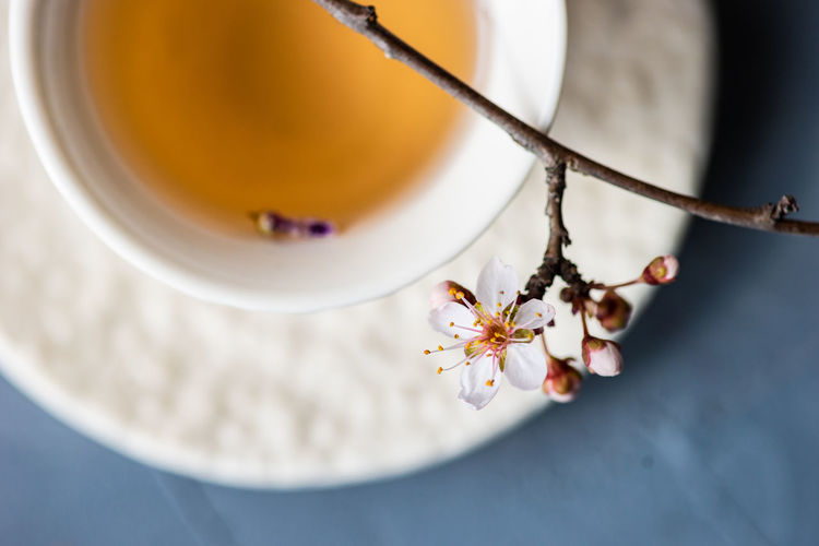 Cherry blossom over herbal tea on table