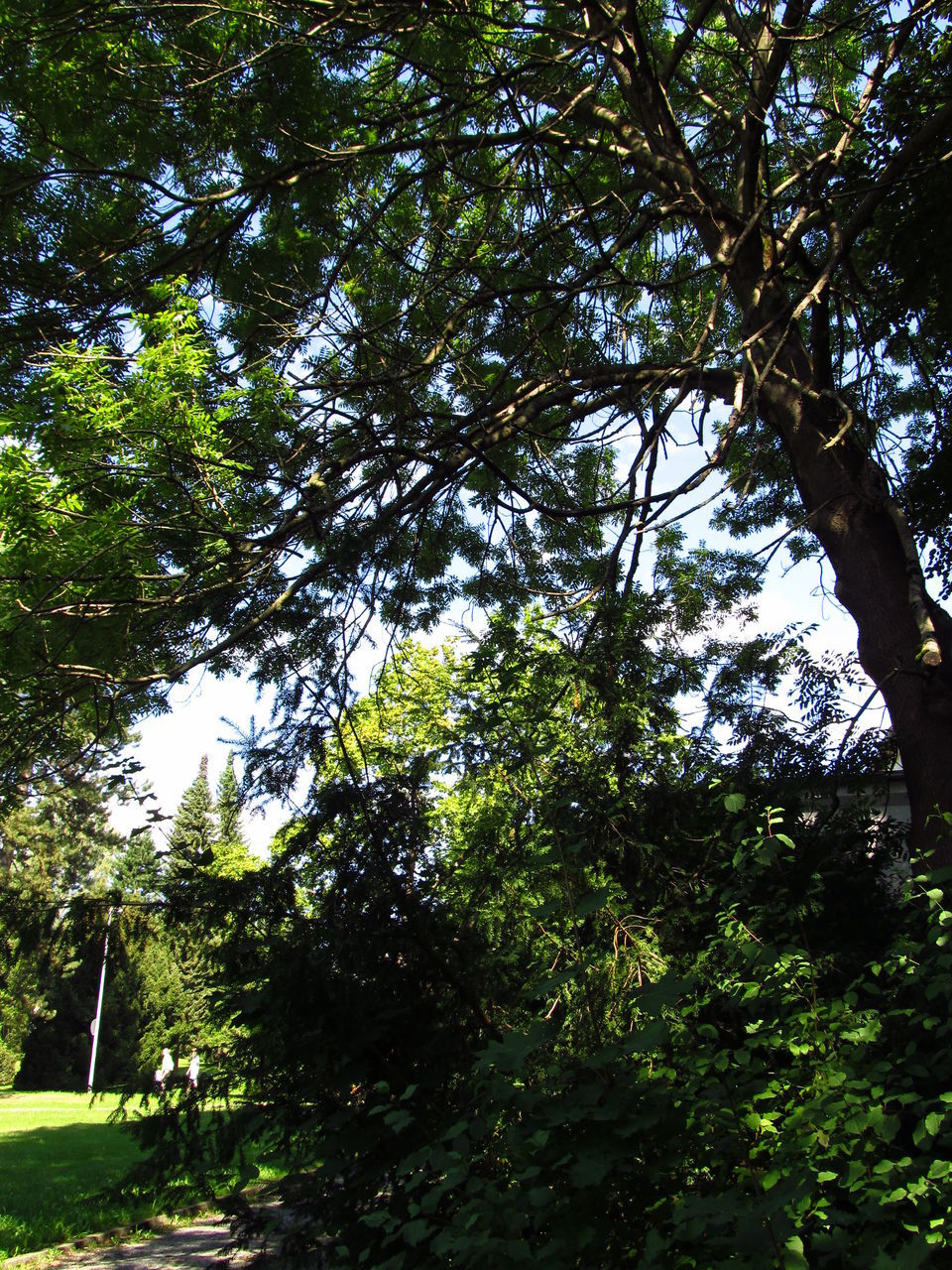tree, growth, low angle view, nature, day, forest, beauty in nature, outdoors, tranquility, green color, branch, no people, scenics, sky