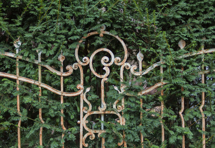 Day Fence GERMANY🇩🇪DEUTSCHERLAND@ Green Color Growth Nature No People Old Fence Outdoors Tree Wiesbaden, Germany