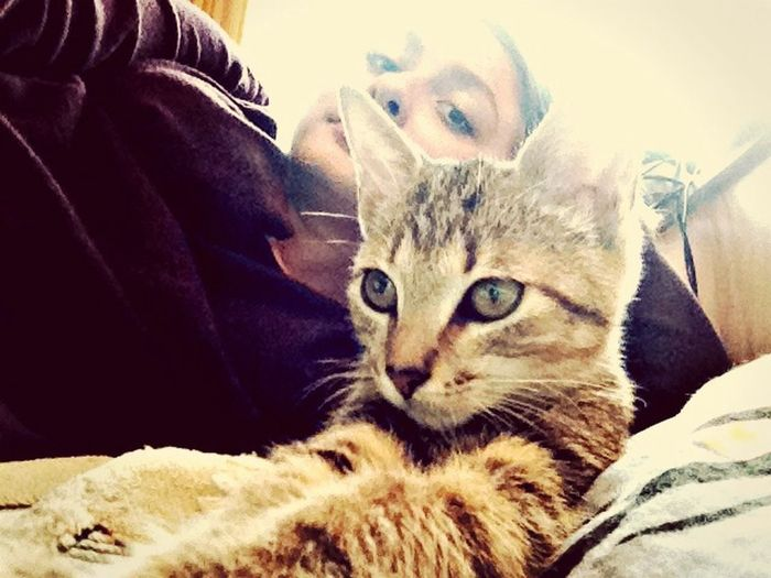 Cute Pets бони серьезная киса