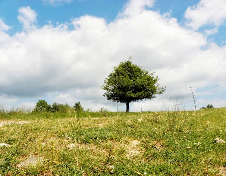 Cloud - Sky Tree Nature Sky Outdoors Day Grass Field Rural Scene Landscape No People Agriculture Beauty In Nature Scenics Summer Time  Sun Sunny Summer Tranquil Scene Tranquility Chillling Green Color Enjoying Life Freshness Watching Nature