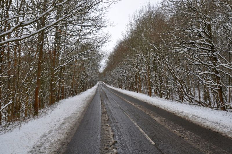 Tree lined winter road Snowy Road Winter Winter Road Winter Roadtrip Cold Temperature Road Snow Snow Road Snowy Roads The Way Forward Tree Lined Winter Winter Journey