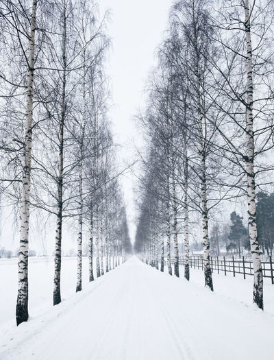 Straight road with birch trees at winter time in Finland Cloudy Finland Straight Bare Tree Beauty In Nature Branch Cold Temperature Empty Frozen Landscape Mood Nature No People Outdoors Road Scenics Snow Snowing The Way Forward Tranquil Scene Tranquility Tree Weather White Color Winter