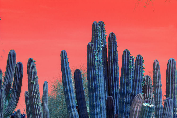 Nature Surrealistic Surrealistic Nature Abstract Nature Abstract Abstract Colors No People Cactus Succulent Plant Sky Beauty In Nature Sunset Growth Landscape Saguaro Cactus Desert Tranquility Plant Scenics - Nature Dusk Outdoors Land Tranquil Scene Multi Colored Business Skyscraper Luminosity