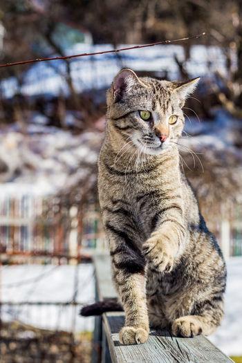 Cat looking at snow