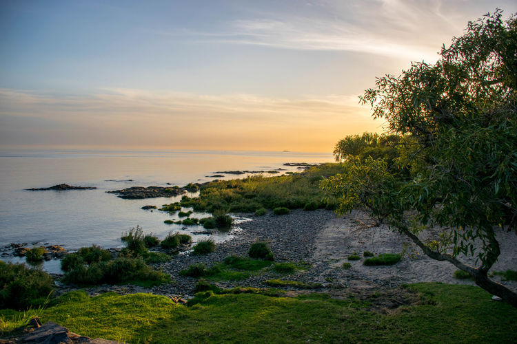 One of the best shots taken in this marvelous little spot of the world. Visit Colonia del Sacramento, Uruguay Beauty In Nature Cloud Cloud - Sky Coastline Grass Growth High Angle View Horizon Over Water Idyllic Nature Plant Rock - Object Scenics Sea Sky Sunset Tranquil Scene Tranquility Tree Trip Water Showcase April My Favorite Photo