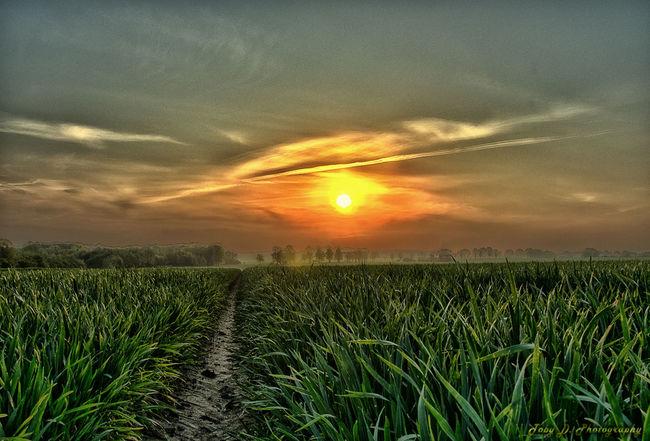 HDR Natur Feld Sunset