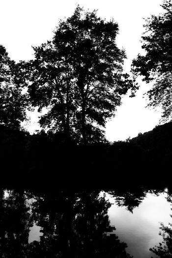 Silhouette trees by lake in forest against sky