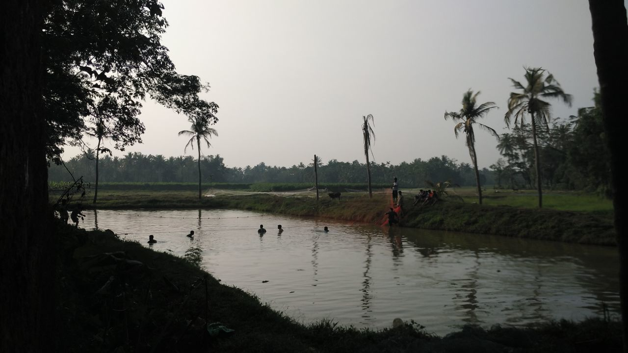 tree, water, palm tree, real people, nature, reflection, beauty in nature, growth, field, outdoors, men, agriculture, river, scenics, rice paddy, landscape, clear sky, sky, day, rural scene, farmer, women, people